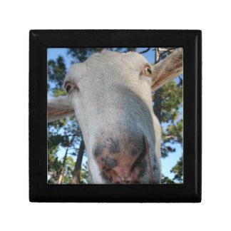 White saanen dairy goat doe nose close up HI Jewelry Box