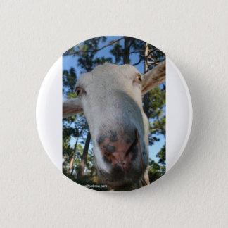 White saanen dairy goat doe nose close up HI Pinback Button