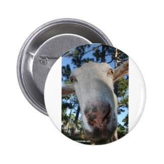 White saanen dairy goat doe nose close up HI Pinback Button