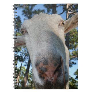 White saanen dairy goat doe nose close up HI Spiral Notebook