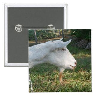 white saanen goat doe against green button