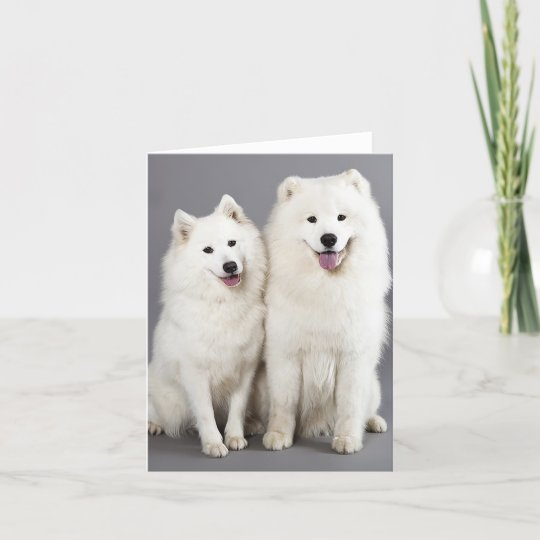 4 Puppy Dog Alaskan Malamute Dogs Puppies Happy Greeting Notecards// Envelopes