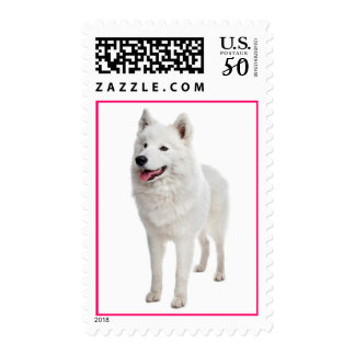 White Samoyed Puppy Dog Pink Postage Stamps