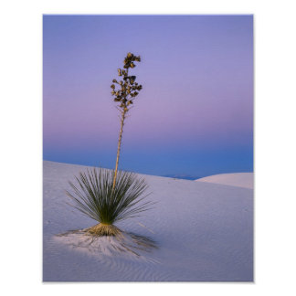 WHITE SANDS NATIONAL MONUMENT, NEW MEXICO. POSTER