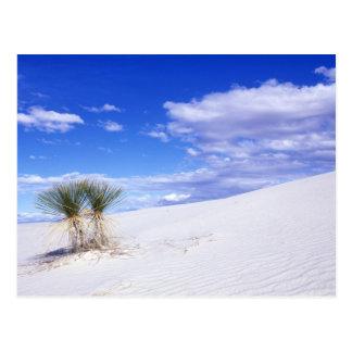 White Sands NM, New Mexico, USA Postcard
