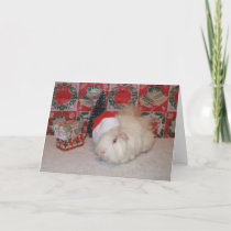 White Santa Pig Holiday Card