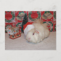 White Santa Pig Holiday Postcard