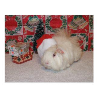 White Santa Pig Postcard