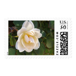 White Satin Postage Stamps