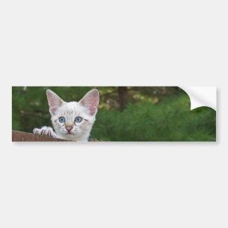White Savannah Cat Background Bumper Sticker