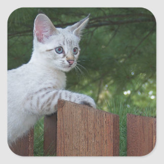 White Savannah Cat Square Sticker