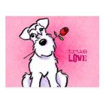 White Schnauzer Rose Love Message Custom Postcard