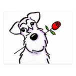 White Schnauzer Sweetheart Rose Postcard