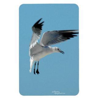 White seagull flying Flexi Magnet