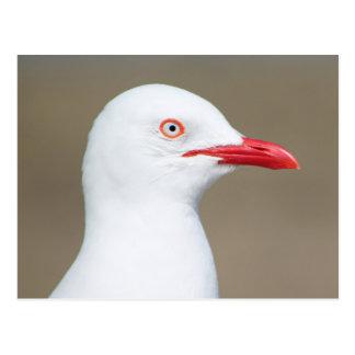 White seagull side portrait postcard