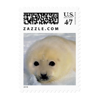 White Seal postage 063