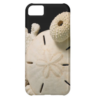 White Seashells And Sand Dollar iPhone 5C Covers