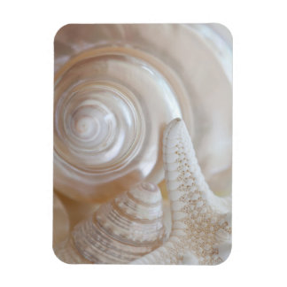 White Seashells Starfish Tropical Beach Sea Shells Magnet