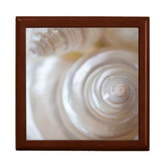 White Seashells Tropical Beach Sea Shells Coastal Keepsake Box
