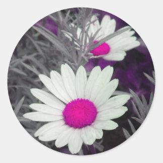 White Shasta Daisy (w/Pink) Stickers