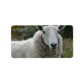 White Sheep Label