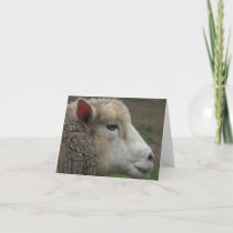 White Sheep note card