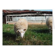 White Sheep on the Farm Card