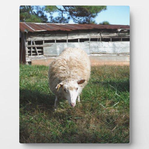 White Sheep on the Farm Display Plaque