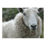 White Sheep Personalized Invitations
