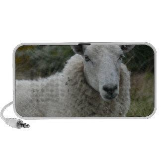 White Sheep Speaker