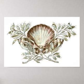 White Shell Print