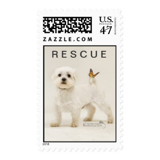 WHITE SHELTER DOG WITH MONARCH BUTTERFLY ON TAIL POSTAGE