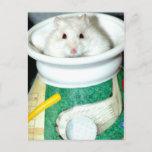 White Shelter Hamster Postcards