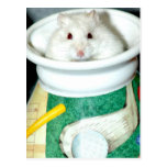 White Shelter Hamster Postcards