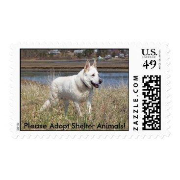Beach Themed White Shepherd - adoption stamp