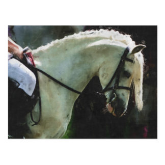 White show pony postcard