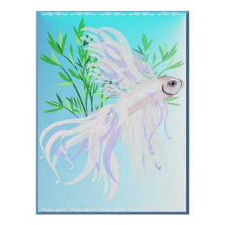 White Siamese Fighting Fish Posters