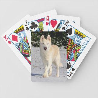 White Siberian husky deck of cards