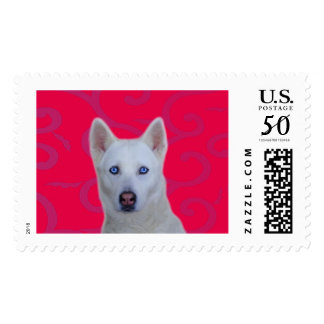 White Siberian Husky Postage