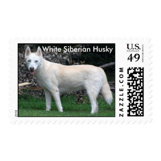 White Siberian Husky postage stamp