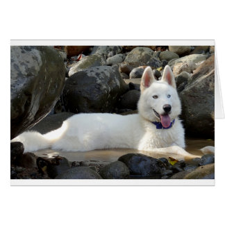 White Siberian Husky Puppy Dog Blank Card