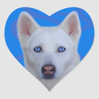 White Siberian Husky Sticker (Blue background)