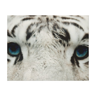 White Siberian Tiger Canvas Print