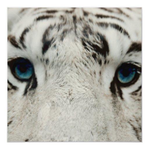 White Siberian Tiger Personalized Announcement