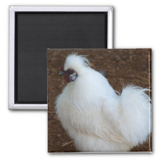 White Silkie Chicken 2 Inch Square Magnet