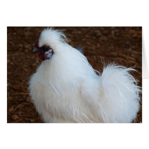 White Silkie Chicken Card