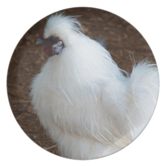 White Silkie Chicken Plate