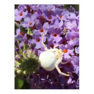 White Smiling Spider Postcard