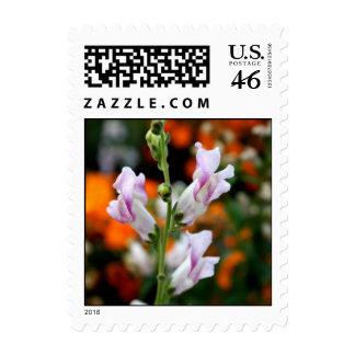 White Snapdragons Stamp