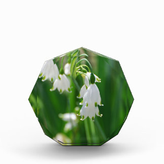 White Snow Drop Lilies Award